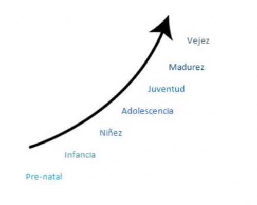 linea de la vida 1 (2)